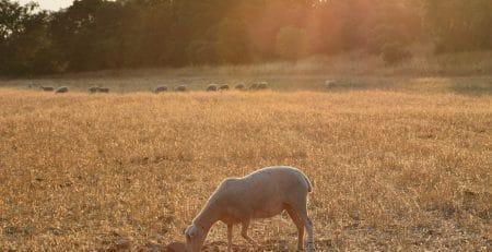 beneficios de la ganaderia