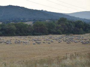 La importancia del pastoreo para prevenir los incendios en verano